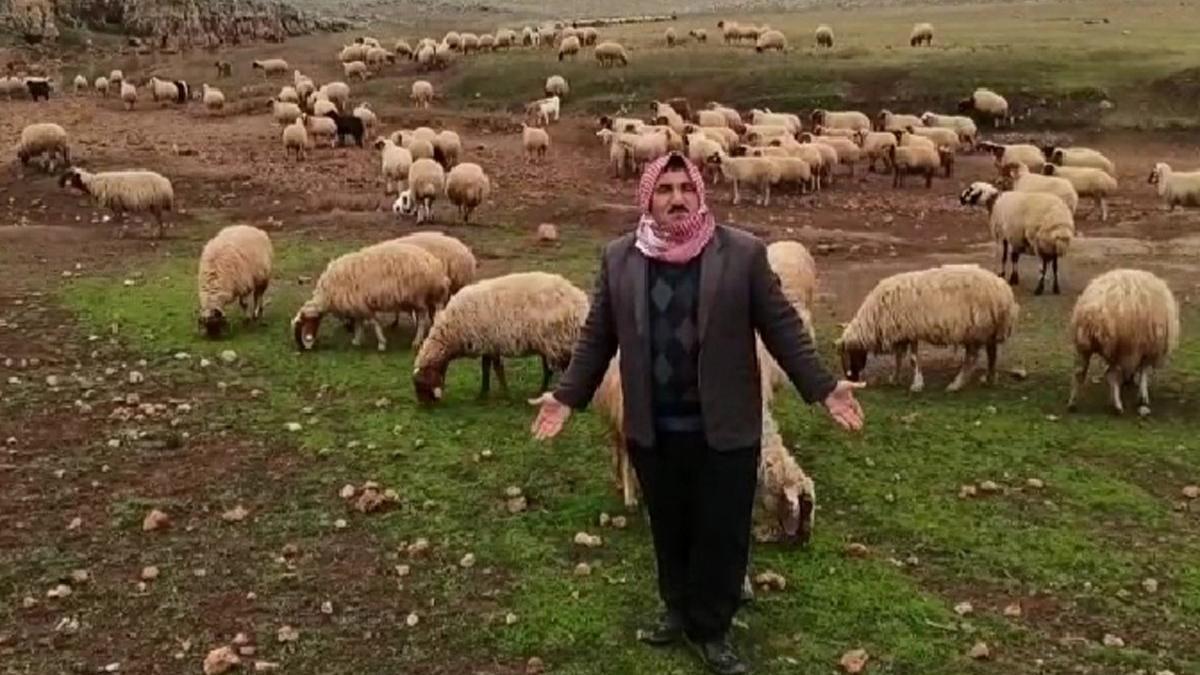 Meralarına el konulan çobanlar isyanda: Nereye gidecek bu hayvanlar?