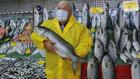 Denizlerde kofana bolluğu: Ağırlığı 12 kiloya kadar çıktı