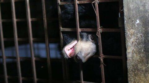 17 senedir karanlık bir bodrumda tutsak kalan 2 hayvan kurtarıldı