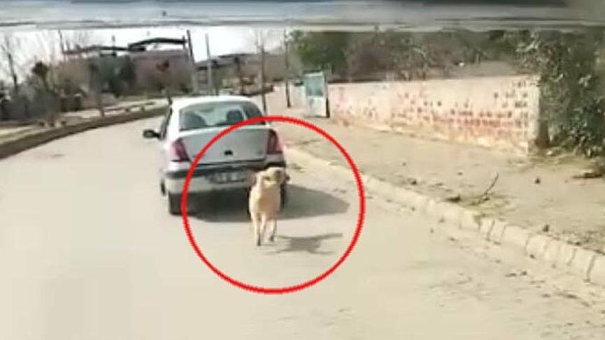 Köpeği iple çeken sürücü: Hayvana eziyet etmedim