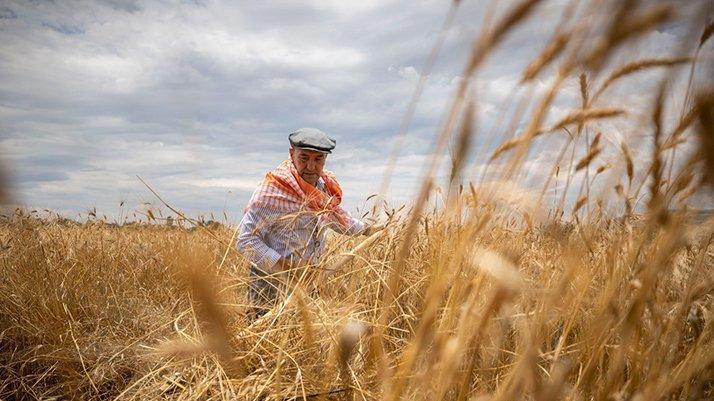 İzmir Büyükşehir Belediyesi'nden tarıma destek