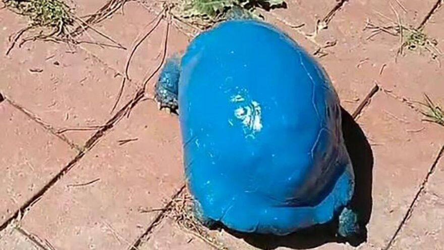 Mavi kaplumbağa soruşturması