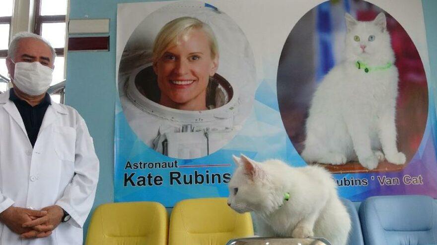 Astronot Kate Rubins'in hediyesi Van kedisi