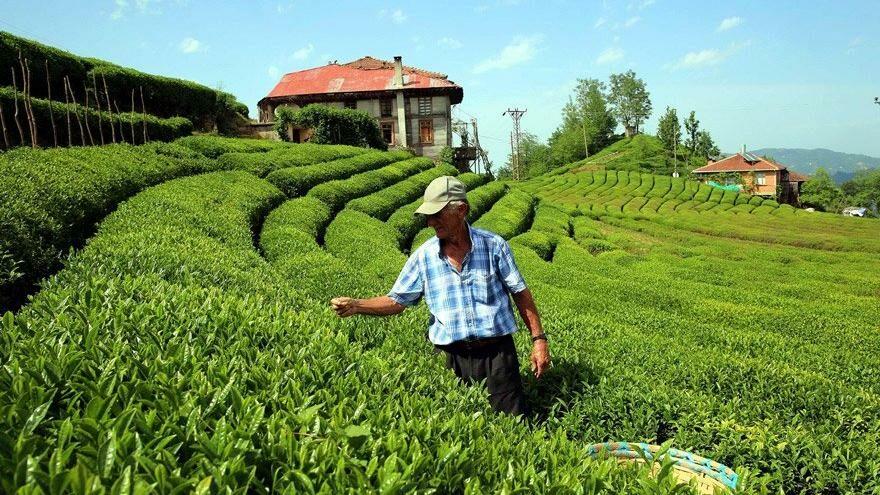 Çiftçinin borcu 72 kat arttı