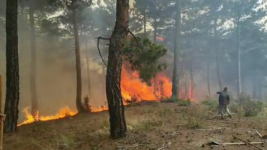 Denizli'de orman yangını: 3 saatte söndürüldü, 4 hektar alan yandı
