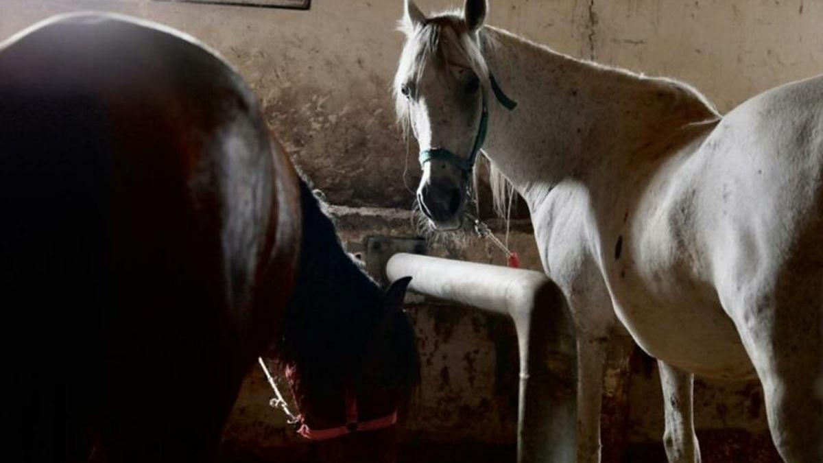 İBB'den kaybolan atlarla ilgili açıklama