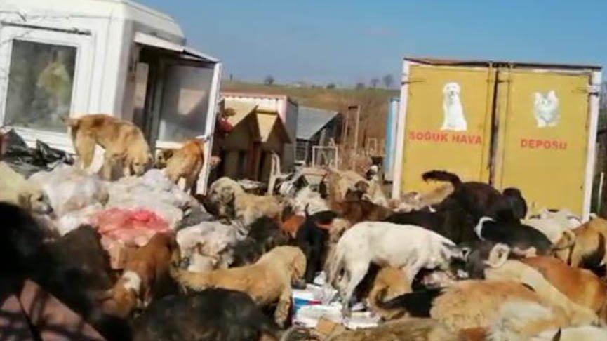 Kötü muamele gören onlarca köpek kurtarıldı