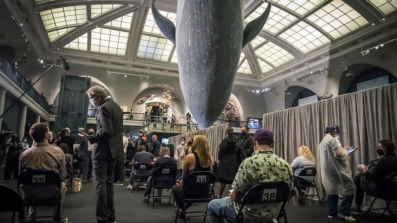 Amerikan Doğa Tarihi Müzesi, COVID aşılamasını eğlenceli hale getiriyor