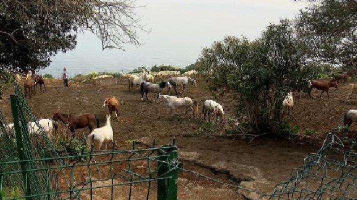 Hatay'daki kayıp atlarla ilgili yeni detaylar ortaya çıktı
