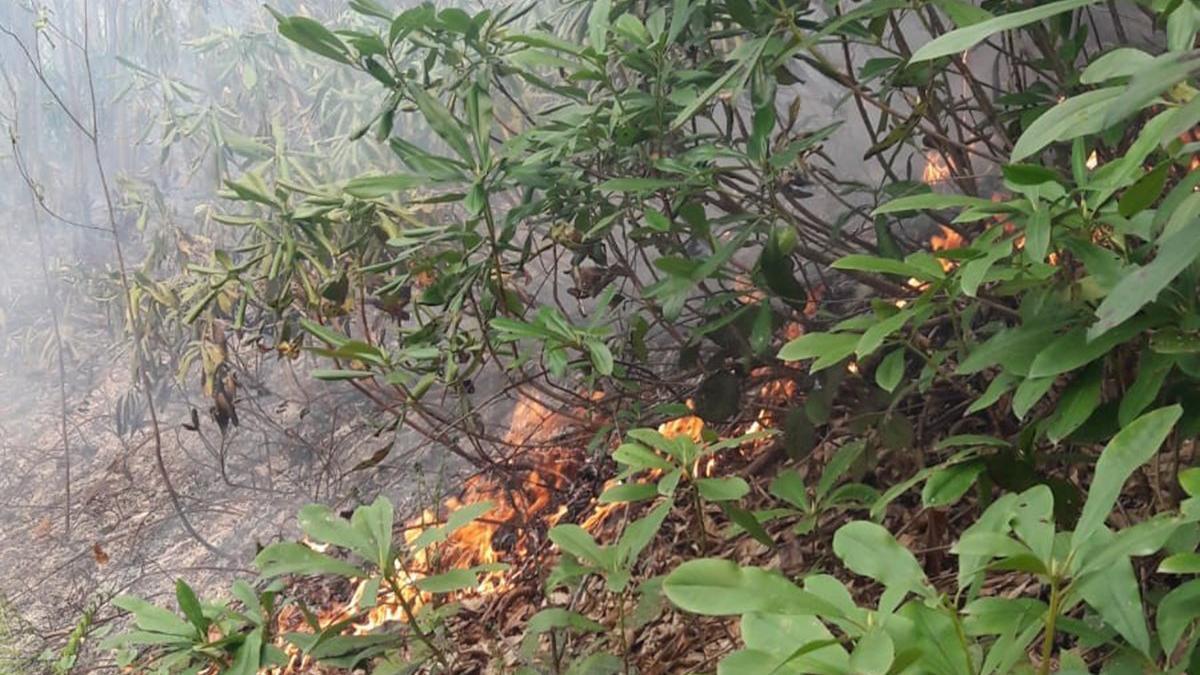Ordu'da orman yangını