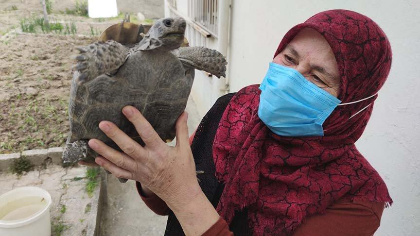 15 yıl önce sahiplendiği kaplumbağayı evladı gibi seviyor