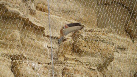 'Kuşlara çelik ağdan hapishane yaptılar'