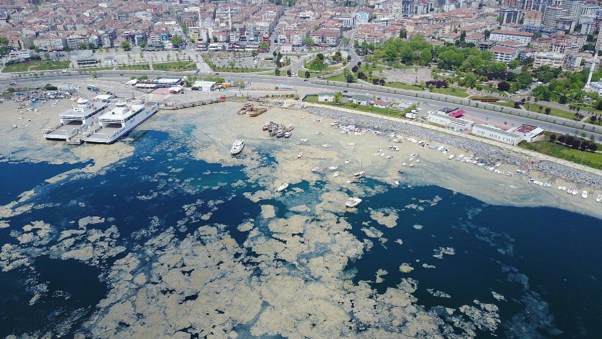 Pendik Marina'yı da deniz salyaları kapladı