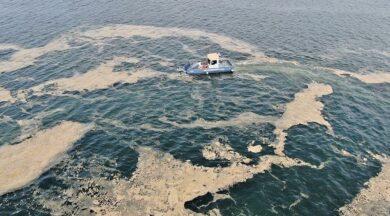 100 ton deniz salyası toplandı