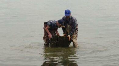 Efsane yayılıyor... İznik Gölü'nde ağlara takıldı!