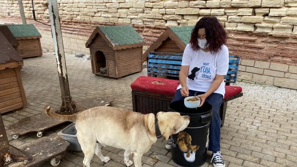 Barınak yöneticisinin hesabını çalıp hayvanseverleri dolandırdılar