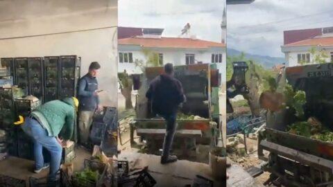 Satılamayan kasalarca yeşillik çöpe döküldü, üreticiler isyan etti