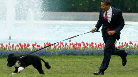 Obama'nın sevimli köpeği yaşamını yitirdi