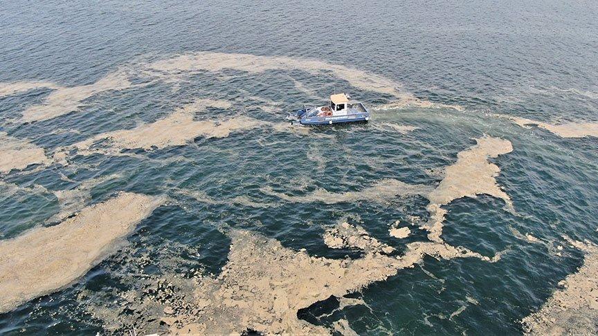İzmit Körfezi'nden 110 ton deniz salyası toplandı
