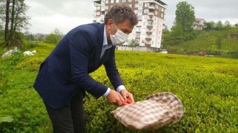 CHP'li Sarıbal'dan yeni 'Çay Kanunu' teklifi