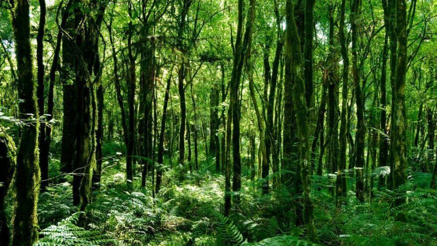 Son 20 yılda canlanan ormanlar iklim krizi için umut vadetti