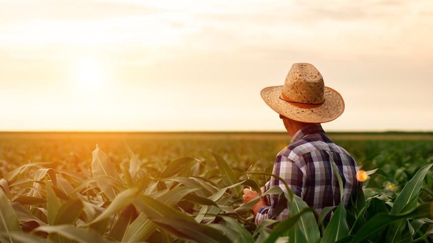 Peşinatı ödeyemeyen çiftçiye icra darbesi