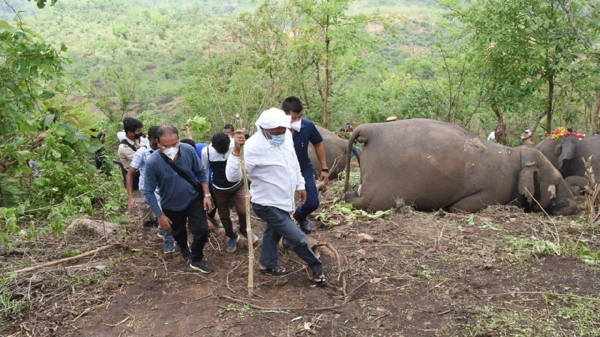 Hindistan'da yıldırım faciası: 18 fil ölü bulundu