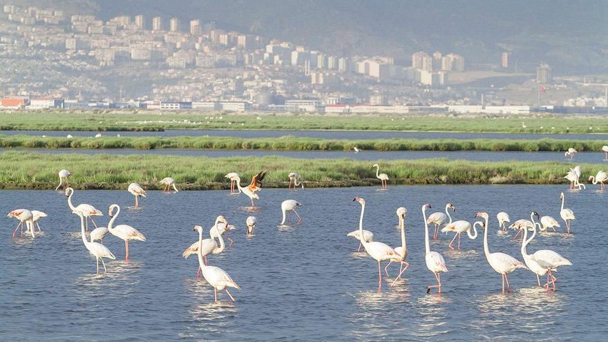 Flamingoma dokunma!