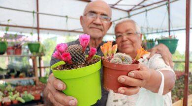 Kansere yakalanan eşi için 1200 kaktüs yetiştirdi