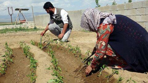 İki üniversite bitirip 81 ili gezdiler, şimdi çiftçiler