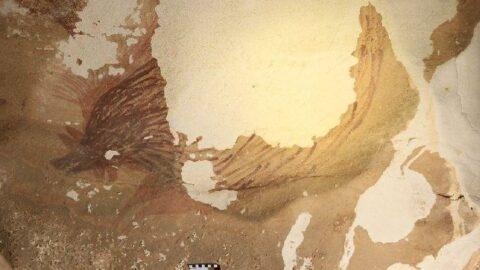 45 bin 500 yıllık çizim, iklim değişikliği kurbanı oluyor