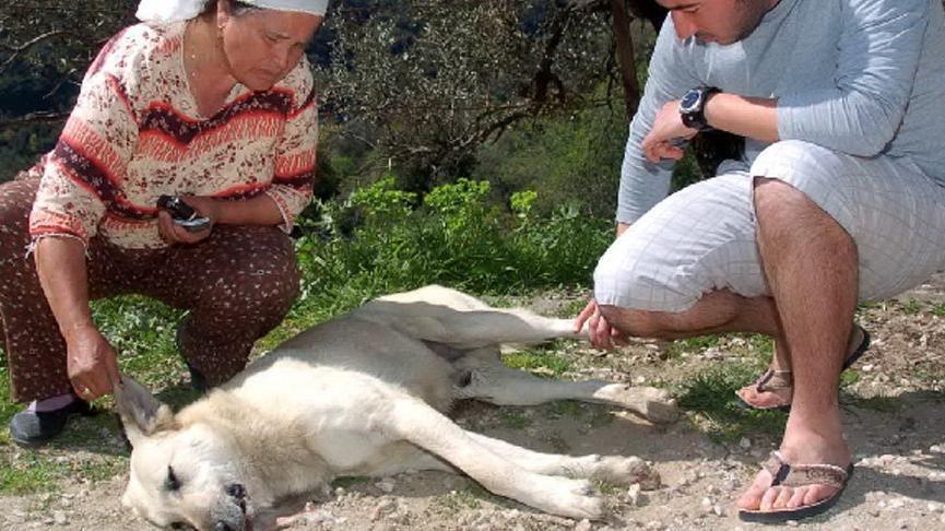 Milas'ta 7 köpek öldürüldü