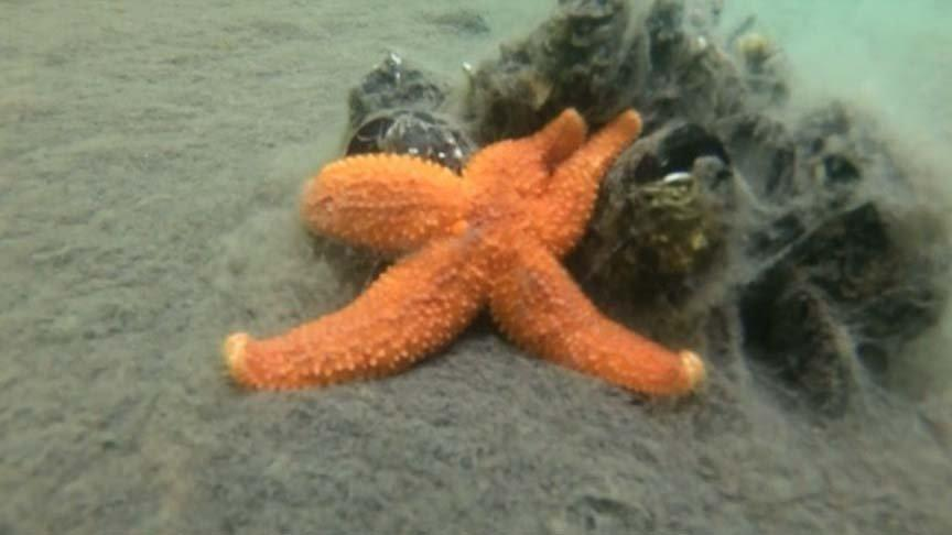 Deniz canlılarının müsilaj kâbusu