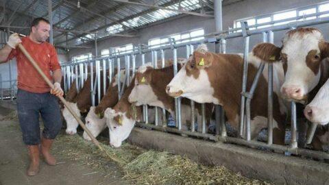Hayvancılık işletmelerine destek kararı