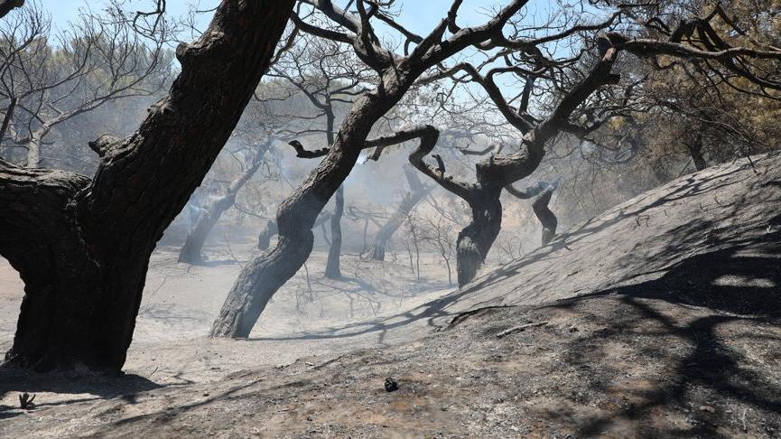 Antalya'da orman yangınında 2 hektarlık alan zarar gördü