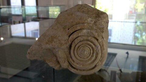 Mersin'de 60 milyon yıllık fosil bulundu