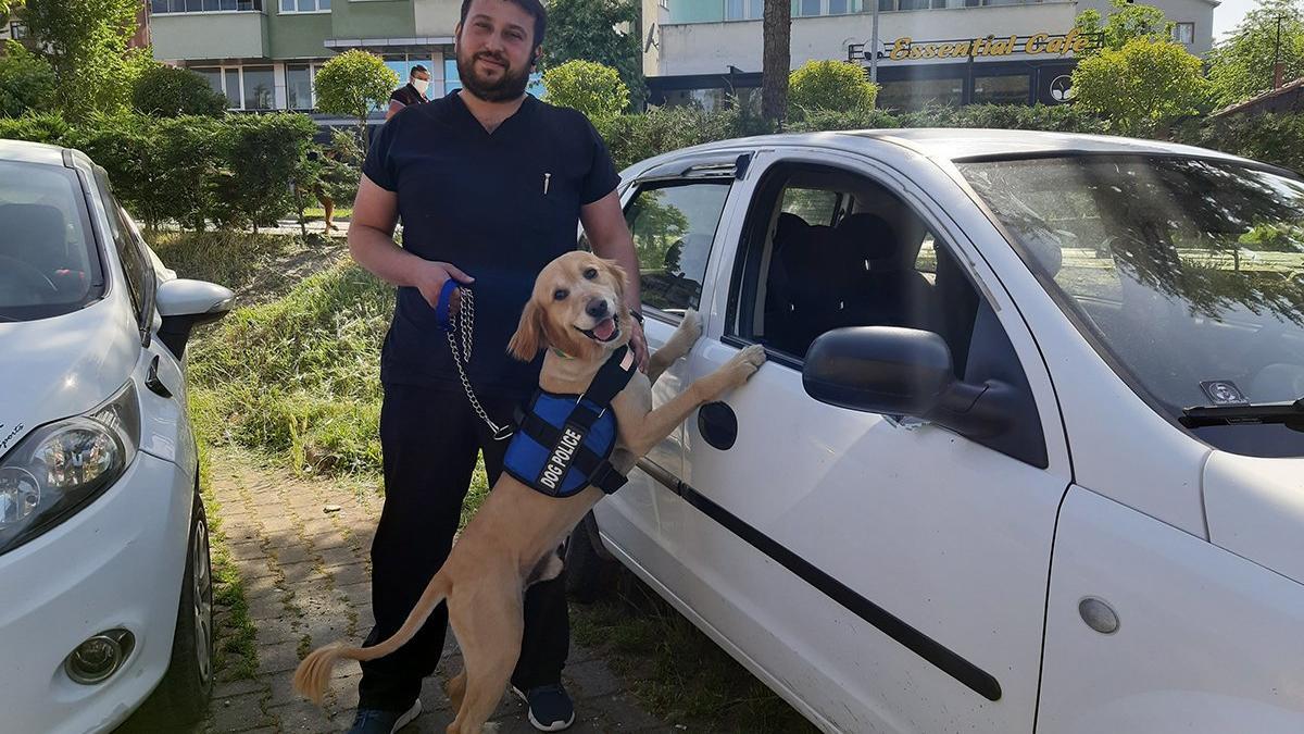 Köpek, mahsur kalan köpeğin hayatını kurtardı