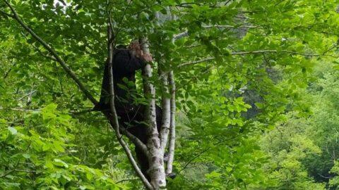 İkizdereliler katliamı durdurmak için ağaçlara çıktı
