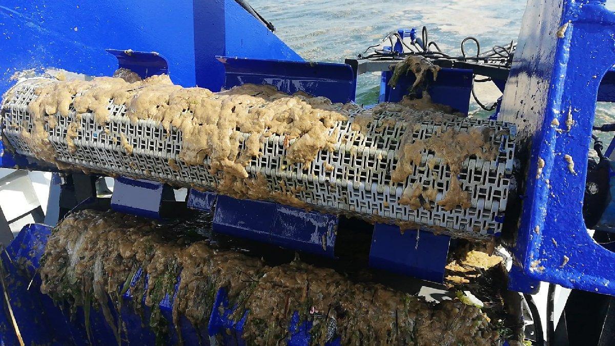Deniz salyasına karşı İBB Mudanya'da temizlik çalışması yapıyor