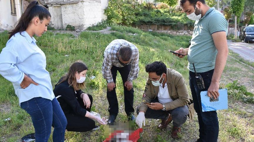 Sivas'ta aynı bölgede ikinci kez işkence yapılarak öldürülmüş kedi bulundu