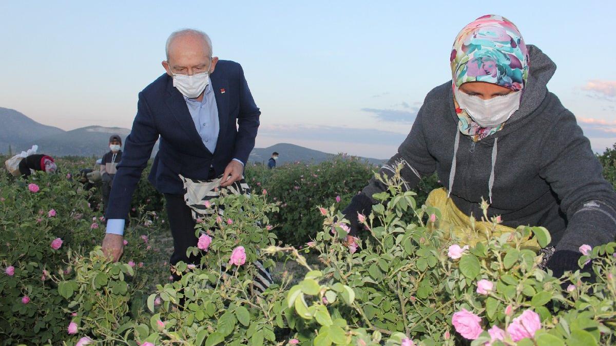 Kılıçdaroğlu işçilerle gül topladı