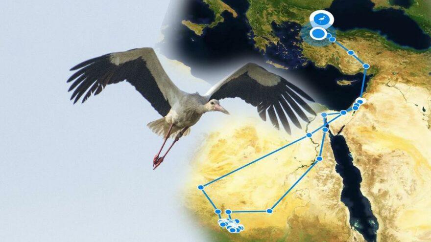 Leylek Klippi 10 bin 800 kilometre uçtu Bursa'ya kondu