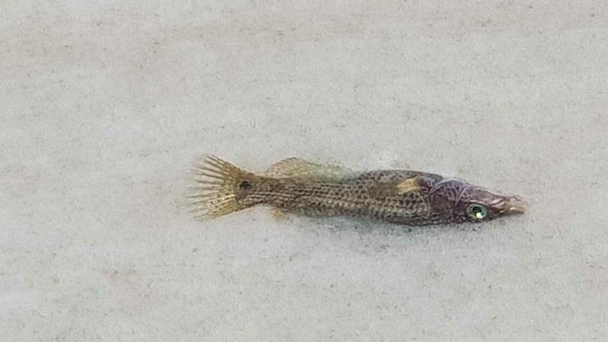 Deniz salyası turizm ve balıkçılığı da öldürüyor
