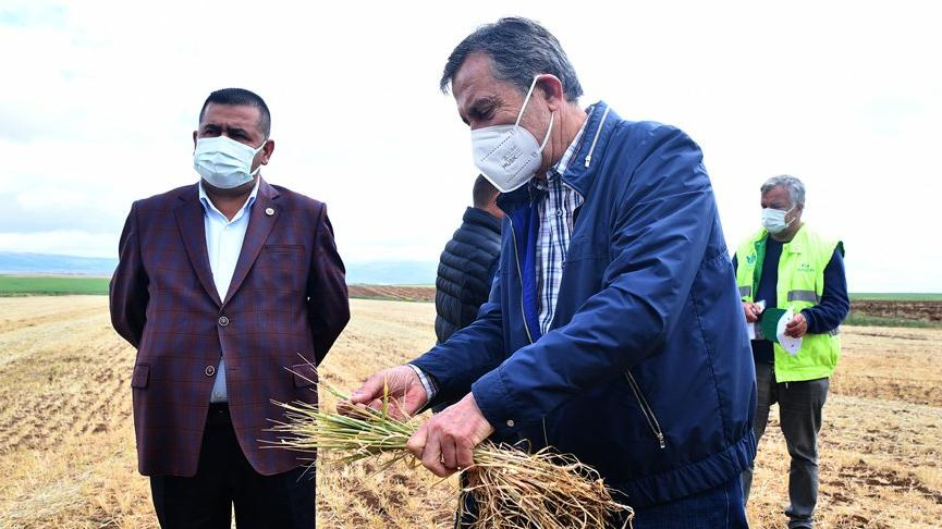 Kuraklık nedeniyle ürünleri kuruyan çiftçi destek bekliyor