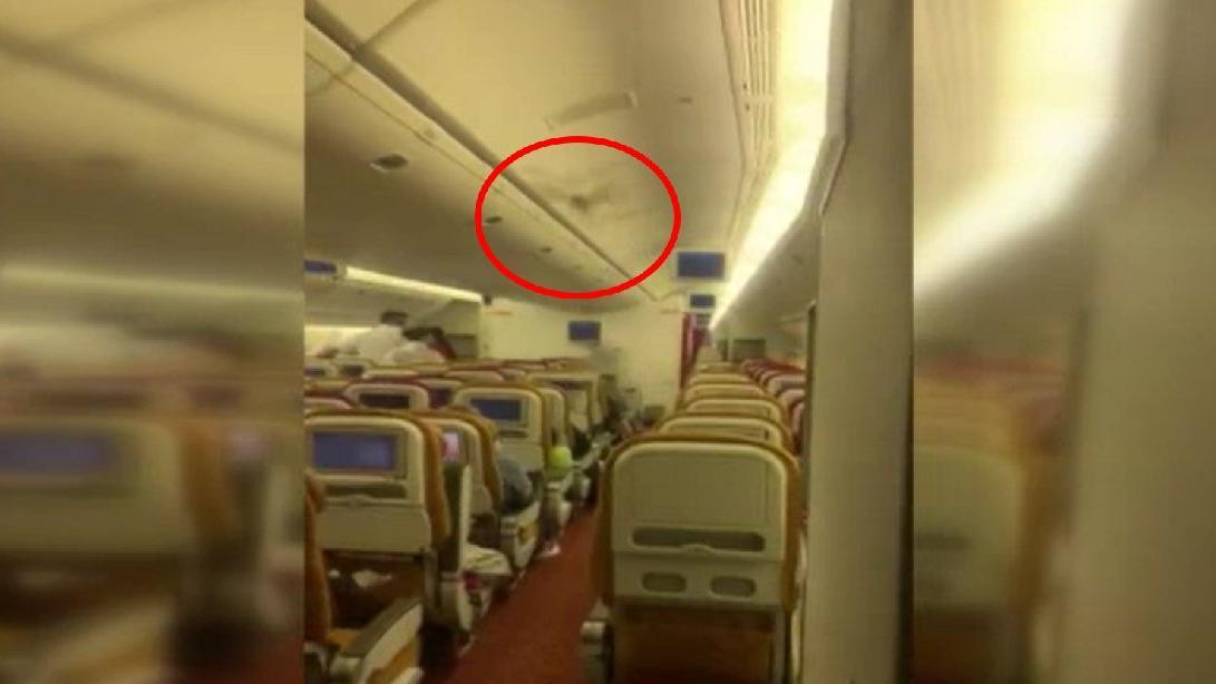 Yolcu uçağında 'yarasa' paniği! Acil iniş yaptı