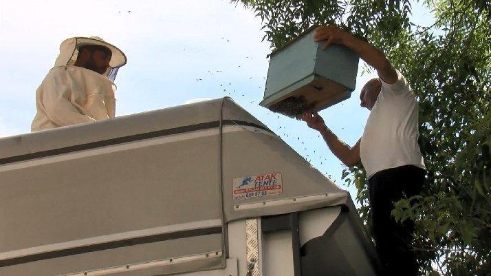 İstanbul'da ağaçtaki arıları kamyonetin üstüne çıkarak aldılar