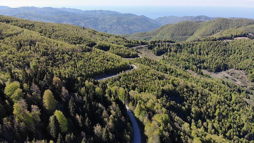 İki ilde ormanlık alanda mangal yasağı