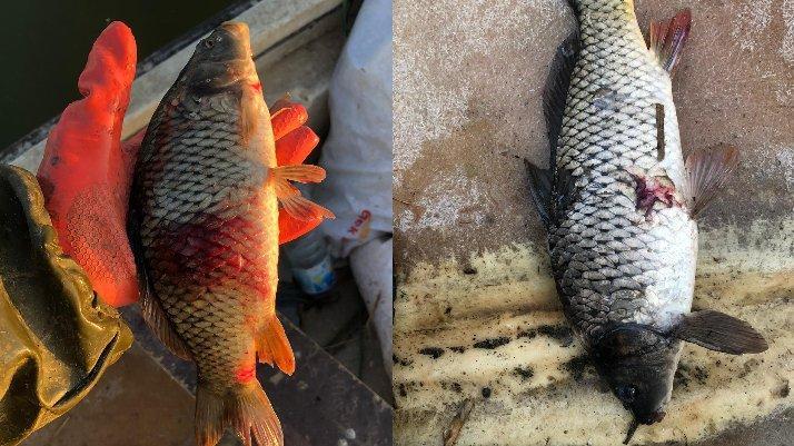 Balıklarda parazite rastlandı... 'Sakın tüketmeyin' uyarısı