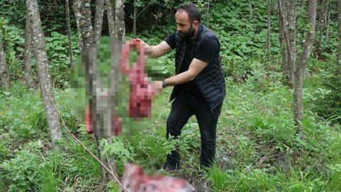 Ayılar inmesin diye ormana et bırakanlara profesörden uyarı