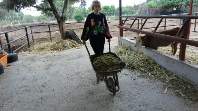 Spikerliği bıraktı, çiftlik kurup hayvancılığa başladı